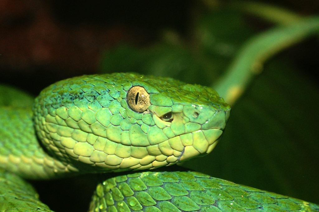 sonar con serpientes