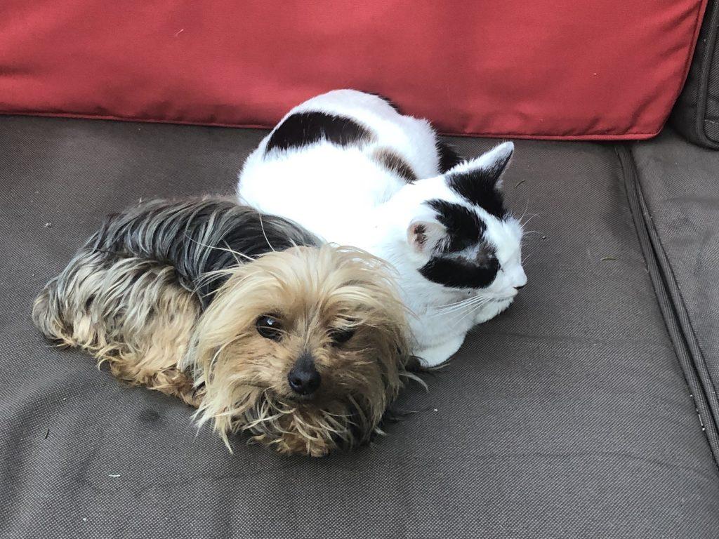 soñar con perros y gatos