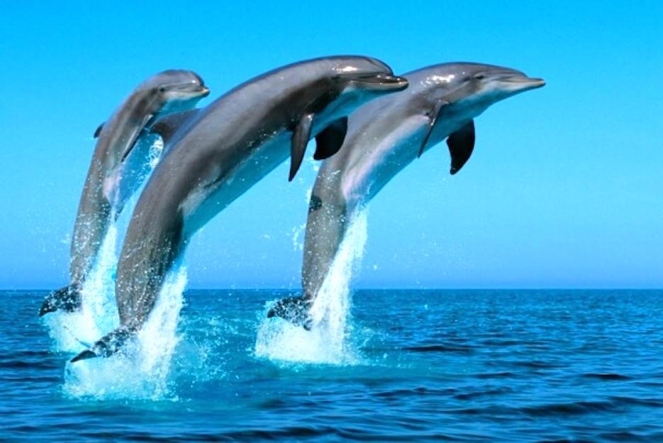 sonar con delfines
