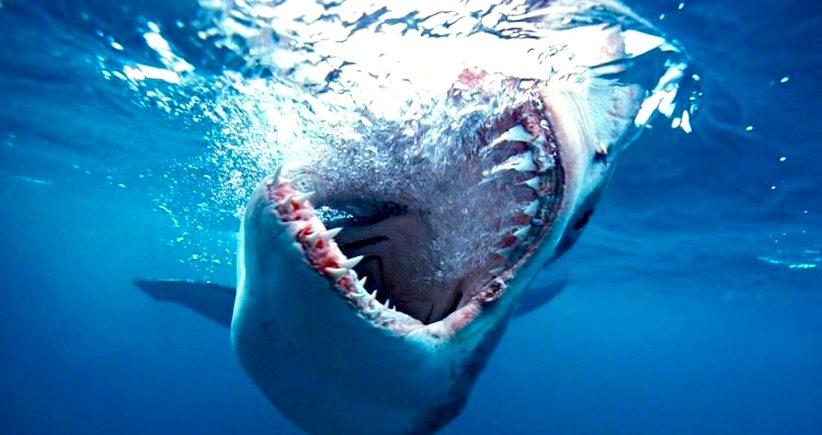 que significa soñar con tiburon