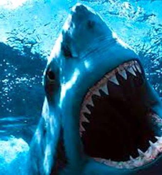 soñar con tiburón